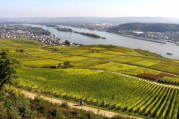 Weinregion Rheingau