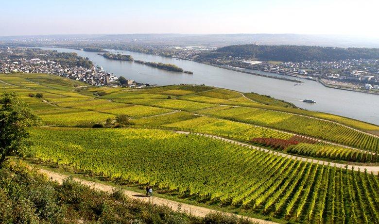 Rüdesheim am Rhein ist nicht nur für seine Weine bekannt, sondern auch für den Branntwein aus dem Hause Asbach.