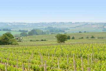 Weinregion Rheinhessen