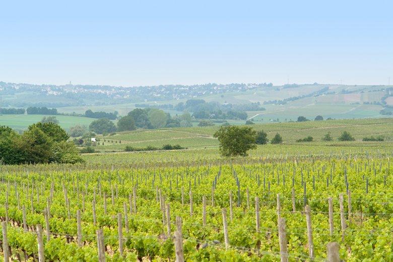 Das Weinbaugebiet Rheinhessen ist das größte Weinbaugebiet in Deutschland.
