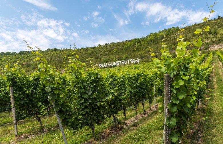 Das Weinbaugebiet Saale-Unstrut ist das zweitkleinste und dabei nördlichste Weinbauregion in Deutschland.