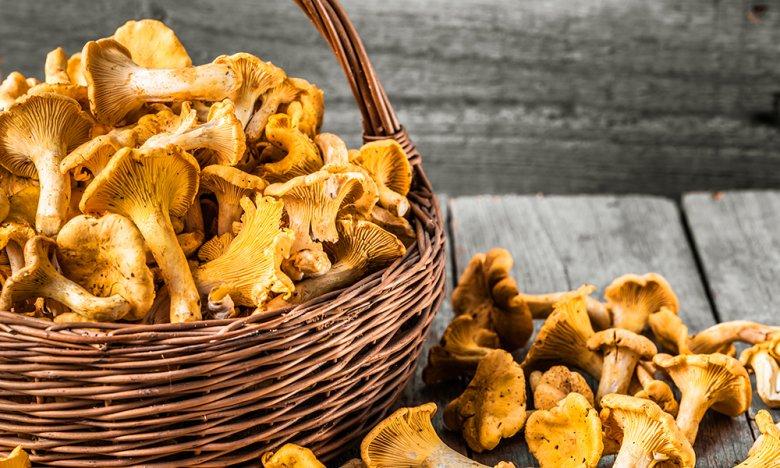 Pfifferlinge sind beliebte Pilze, die man selbst sammeln kann.