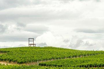 Weinregion Württemberg