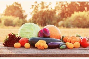 Herbstgemüse, die leckere Vielfalt