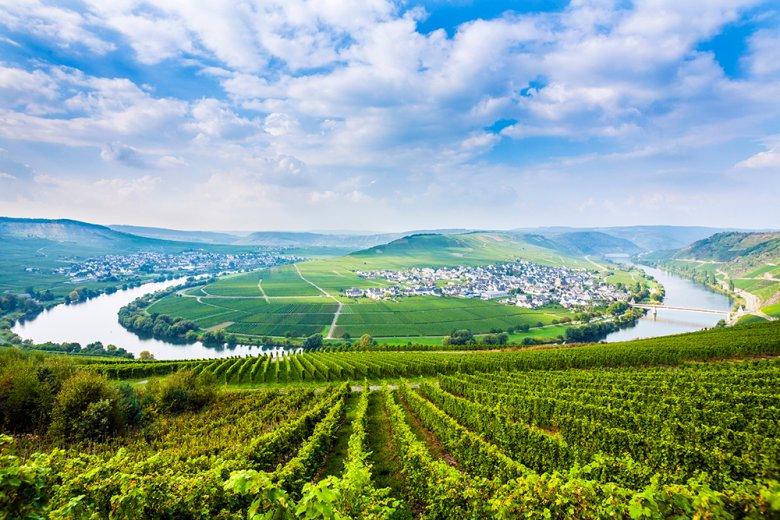 Die Mosel-Region ist Deutschlands älteste Weinregion und durch ihre Steillagen fast einzigartig.