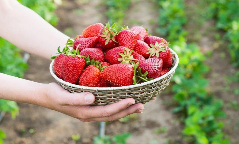 Erdbeeren sind auch Symbol der sexuellen Lust sowie Ausdruck von Sinnlichkeit.