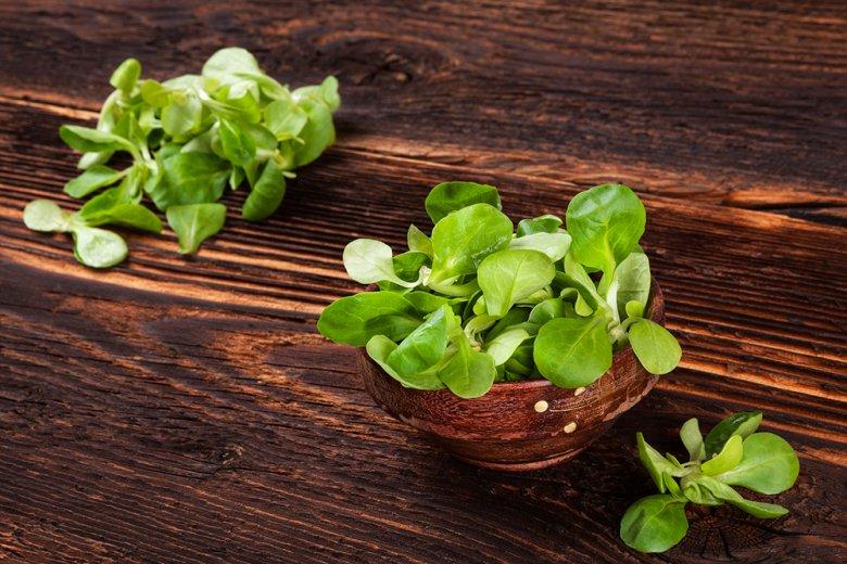 Der Feldsalat zählt zu den wenige Gemüsesorten, die im Winter Saison haben.