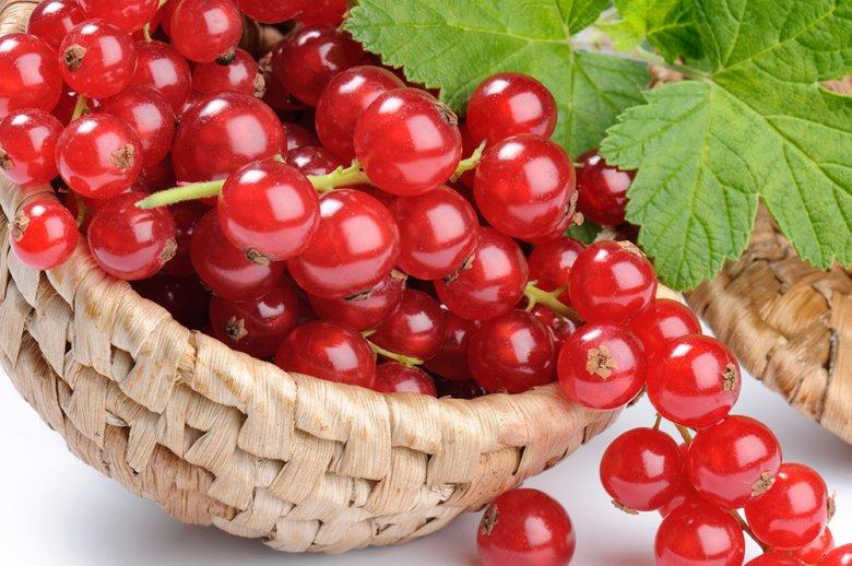 Die leicht säuerlichen Früchte sind vor allem bei der Herstellung von Konfitüre sehr beliebt.