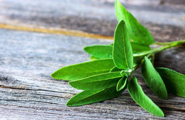 Ein Tee aus Salbeiblättern hilft besonders wirksam bei Entzündungen der Atemwege.