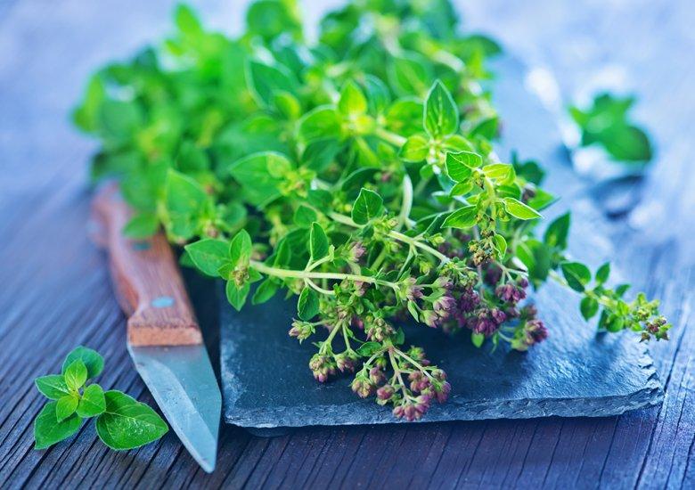 Die Blätter werden frisch oder getrocknet zum Würzen von verschiedenen Speisen verwendet.