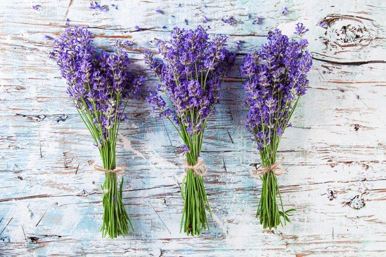 Lavendel wirkt beruhigend bei nervösen Unruhezuständen, Einschlafstörungen und Kreislaufbeschwerden.