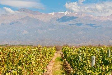 Weinland Argentinien - argentinische Weine