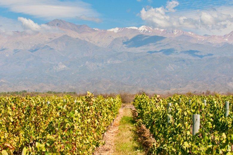 Das Weinbaugebiet Mendoza gehört mit 146.000 ha Rebfläche zum größten in Argentinien.