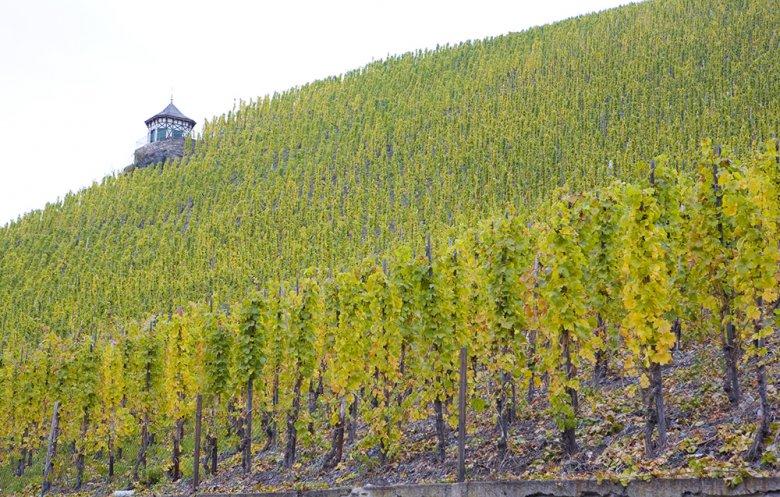 Rheinland-Pfalz zählt zu Deutschlands Weinland Nummer 1.
