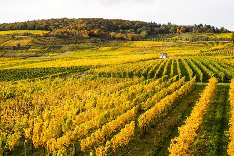 Der Weinbau am Mittelrhein wird von meist kleinen privaten Weingütern dominiert, Anbau und Ausbau des Weines liegen meist in einer Hand.