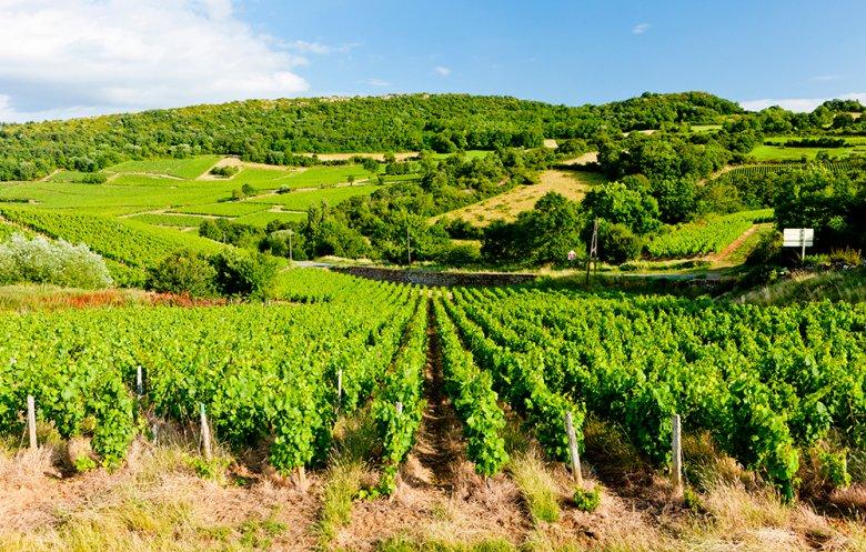 Die Weinregion Burgund liegt im Norden von Frankreich.