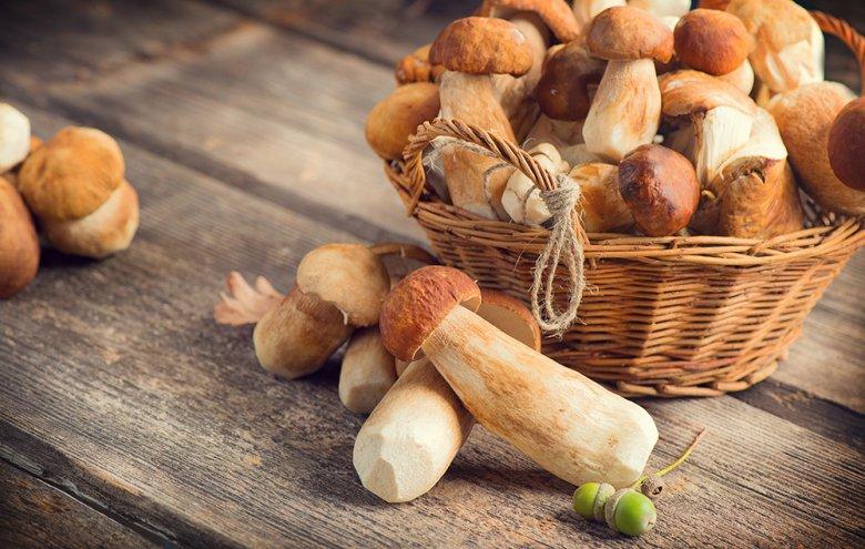 Pilze sind sehr gesund, doch dürfen Pilzgerichte auch aufgewärmt werden?
