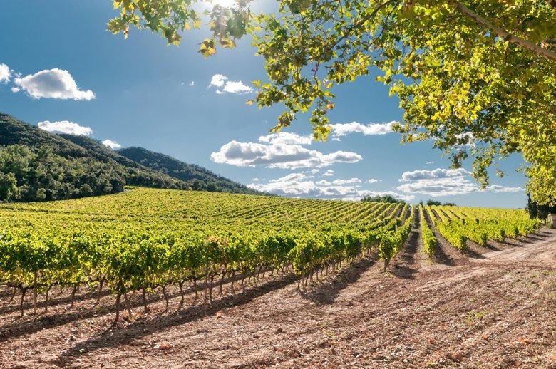 Spanischer Wein kann es locker mit den großen Weinen anderer Länder aufnehmen.