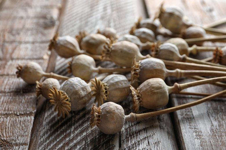 Zum Kochen und Backen werden die Samen aus den Kapseln der Mohnpflanze verwendet.