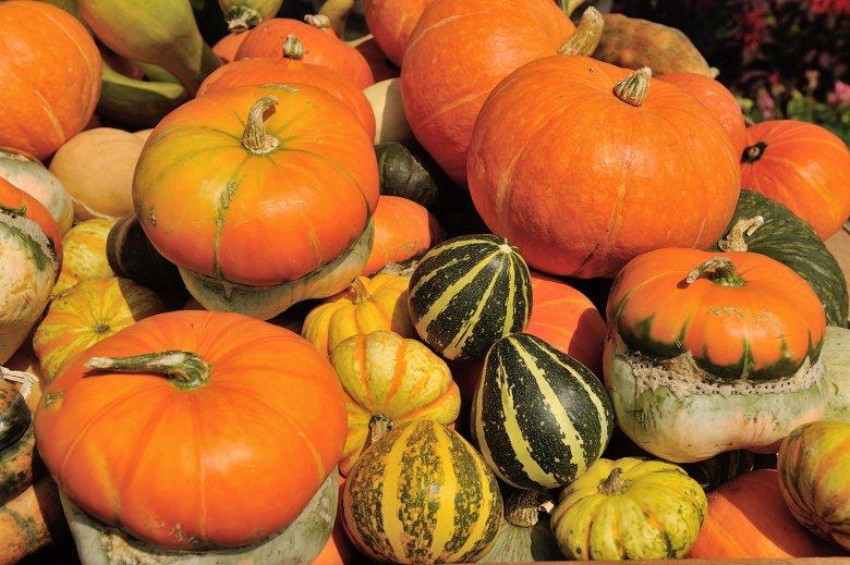 Kürbis ist nicht gleich Kürbis, denn je nach Sorte unterschieden sich diese in Geschmack und Verwendung in der Küche.