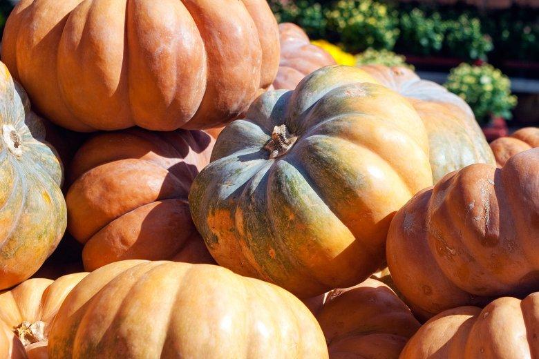 Der Muskatkürbis ist auch unter den Namen Muscade de Provence oder Moschuskürbis bekannt.