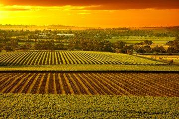 Weinland Australien - australische Weine
