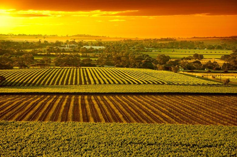 Das Gebiet im Barossa Valley gehört zu den bekanntesten Weinbauregionen in Australien.