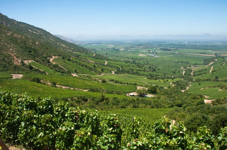 Aus dem Apalta Valley in Chile kommen viele Spitzenweine.