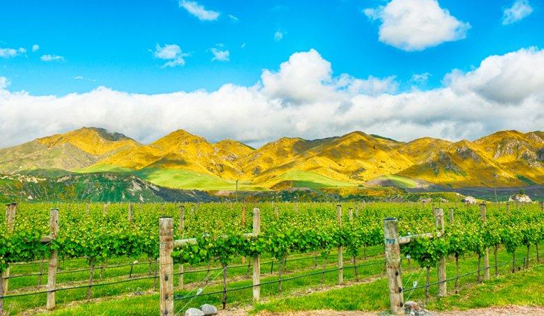 Neuseeland hat sich in relativ kurzer Zeit einen sehr guten Namen als Weinbaunation gemacht.
