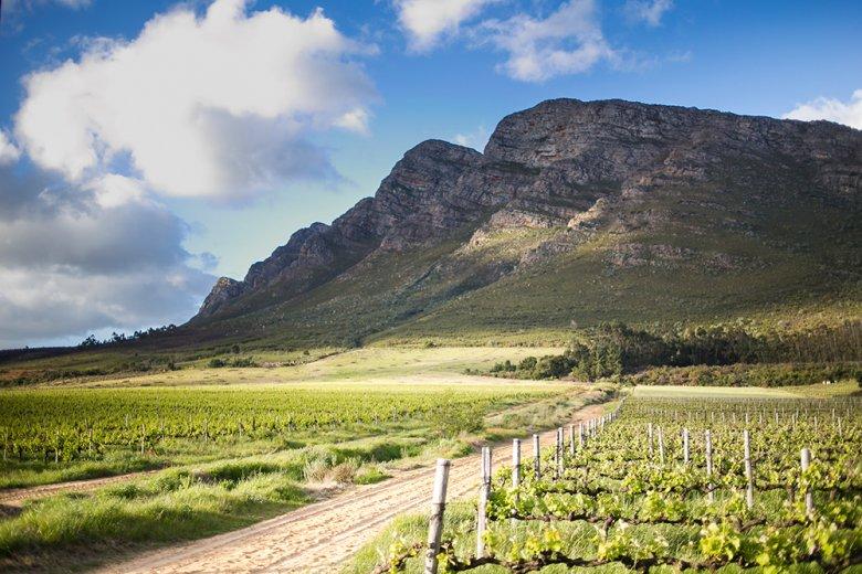 Der Weinbau in Südafrika ist ein wichtiger Wirtschaftsfaktor und gewinnt immer mehr an Bedeutung.