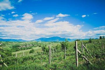 Weinland Bulgarien - bulgarische Weine
