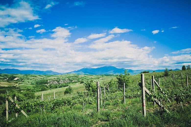 In Bulgarien wurden bereits vor 3000 Jahren Reben kultiviert.