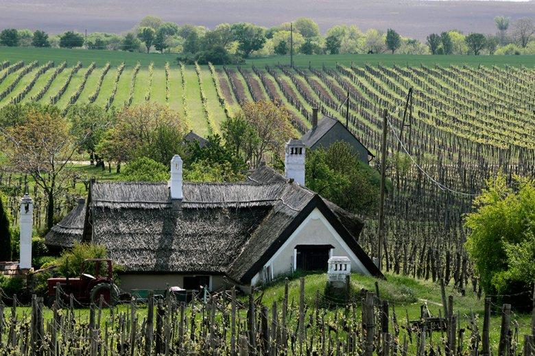 Am Balaton, dem größte Süßwassersee Mitteleuropas, liegt eines der bekanntesten Weinbaugebiete Ungarns.