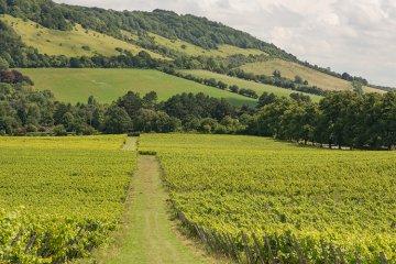 Weinland England - englische Weine