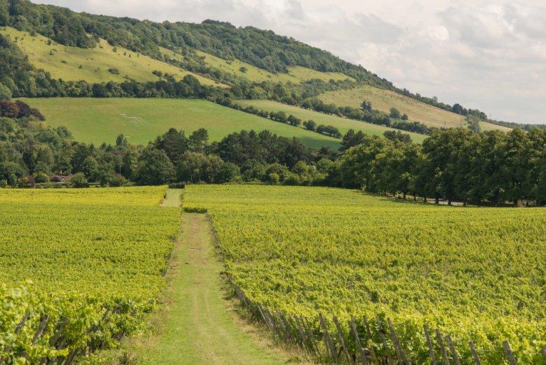 Bereits die Römer brachten die ersten Weine und Weinreben auf die Insel.