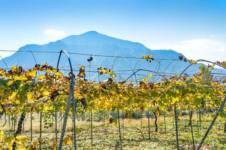 Obwohl Japan am Weinmarkt keine große Rolle spielt versuchen sie mit am Weinhandel mit zu naschen.