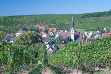 Weinregion Baden