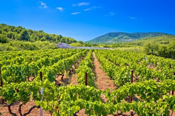 Weinland Kroatien - kroatischer Wein