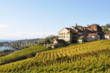 Weinland Schweiz - schweizer Wein
