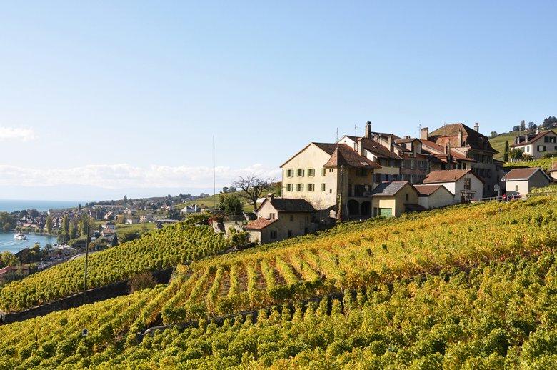 Die Weinberge in der Region Lavaux am Genfer See umfassen ca. 805 Hektar.
