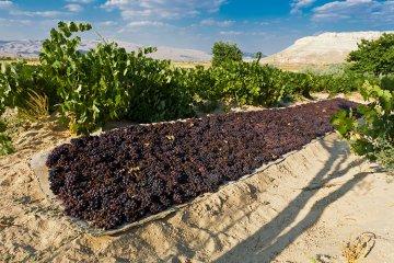 Weinland Türkei - türkischer Wein