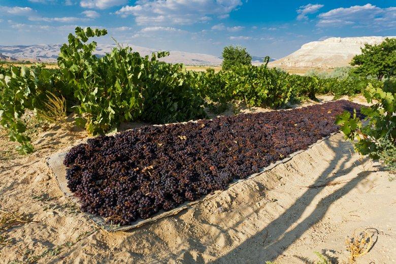Nur 5% der gesamten Traubenfläche wird für dein Weinbau verwendet – der Rest für Rosinen und Co.