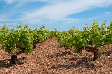 Weinland Zypern - Wein aus Zypern