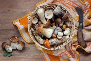 Pilze vom Wald in die Küche