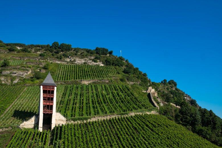 Mit der Herkunftsbezeichnung Pfalz werden Qualitäts- und Prädikatsweine hergestellt, die als Pfalzweine bezeichnet werden.