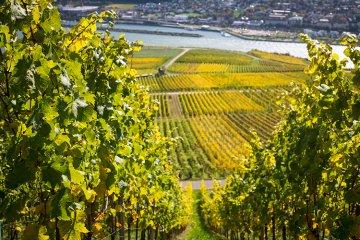 Weinregionen in Deutschland